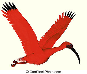 Scarlet ibis - The Scarlet ibis is a wading bird that uses...
