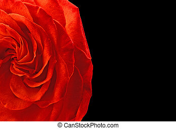 An illustration. A fragment of a bright red rose on absolutely black background.