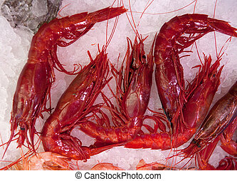 Scarlet shrimps on ice at the fishmonger?s