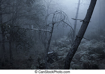 Scary foggy forest