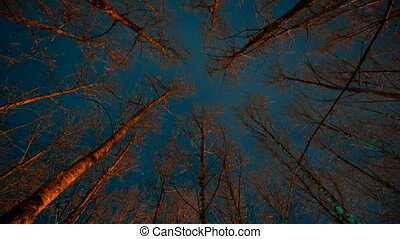 Scary forest at night time lapse