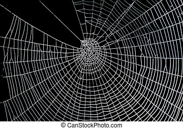 scary frightening spider web for halloween