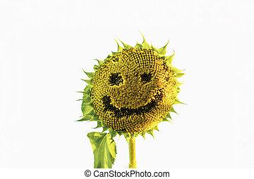 Scary Halloween sunflower with human face against blue sky.