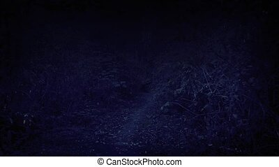 Scary POV Through Night Woods - Moving through the trees on...