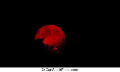 Scary Red Moon Moving Behind The Trees