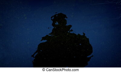 Scary Reflection Of A Person In Water At Night - Dark figure...