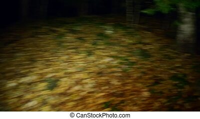 Scary trees with roots in a dark forest. Victim escapes runs away from a maniac