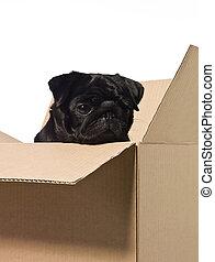 scatola, cane