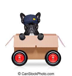 scatola, cane, spostamento