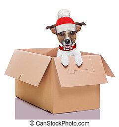 scatola, cane, spostamento, inverno