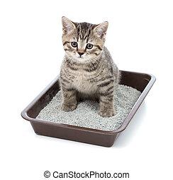 scatola, gabinetto, poco, gatto, figliata, gattino, vassoio,...