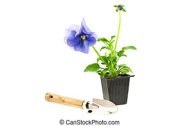 scatola, giardinaggio, germoglio, attrezzo, plastica, pansy\'s, viola