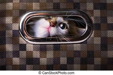 scatola, grigio, arte, su, gatto, dall'aspetto, spaventato,...