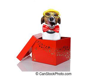 scatola, natale, cane