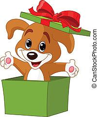 scatola, saltare, cucciolo, fuori