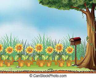 scatola, vaso, fiore, lettera