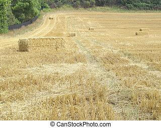scattered hay