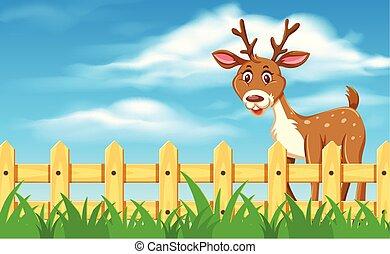 scena, carino, paesaggio, cervo