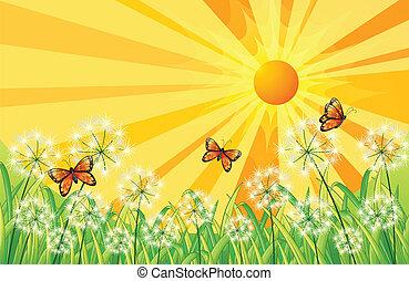 scenario, farfalle, tramonto