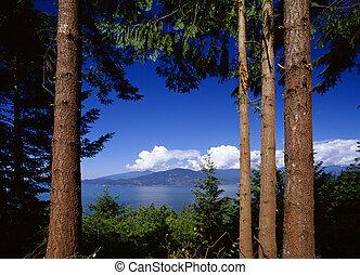 scenario, foresta, mare