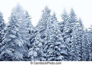 scenario, inverno