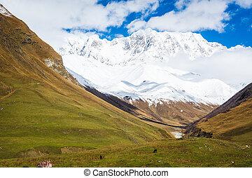 scenario, picchi montagna, nevoso, mucche, valle fiume, paesaggio, prato