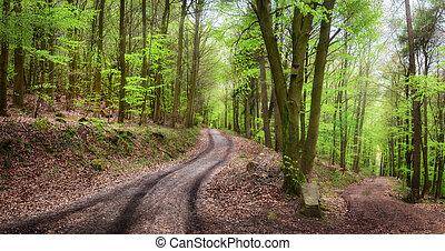 scenario, tranquillo, foresta
