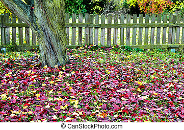 scenario, vecchio, recinto, foglie, ted, autunno, albero, ...