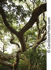 scene., εύχυμος , δέντρο