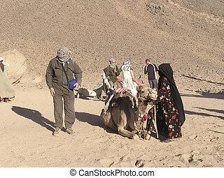 scene desert