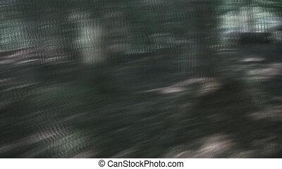 scene., forêt, chasse