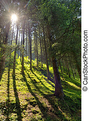 Scene  Forest with Sun Rays