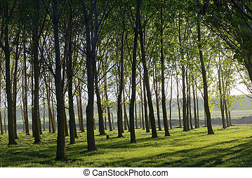 Forest with Sun Rays in summer