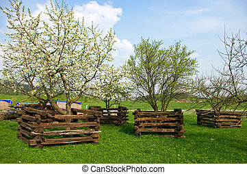 Scene in orchard during the spring