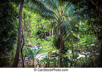 Scene looking straight into a dense tropical rain forest,