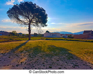 Scene of a pine tree at sunset