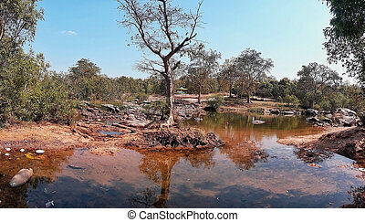 Scene of nature with stump tree.