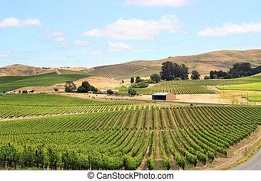 Scene of vineyard field in napa valley