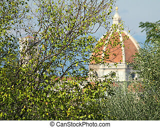 scene with cathedral of Florence and tree
