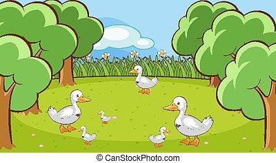 Scene with ducks in the garden