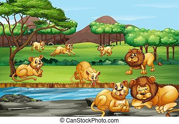 Scene with many lions in the field