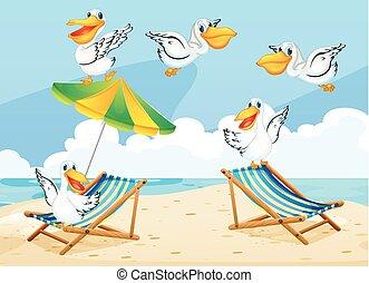 Scene with pelican birds on the beach