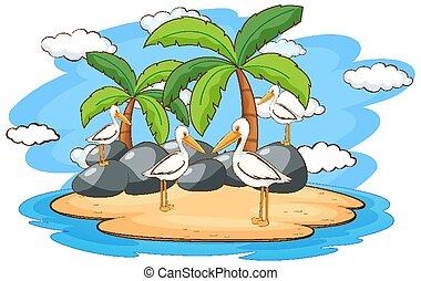 Scene with pelican birds on the island