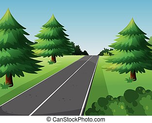 Scene with pine trees along the road