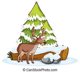 Scene with reindeer in snow