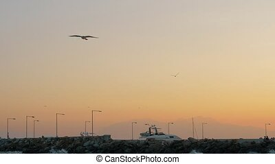 Scene with sea, quay and seagull flying in the sky at sunset...