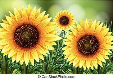 Scene with sunflowers in garden