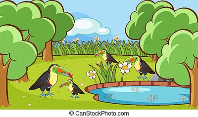Scene with toucan birds in the park