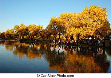 Scenery in autumn