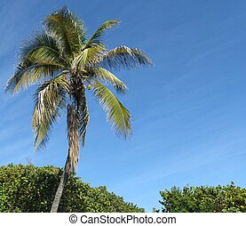 Florida Keys - Scenery of Bahia Honda State Park in Florida...